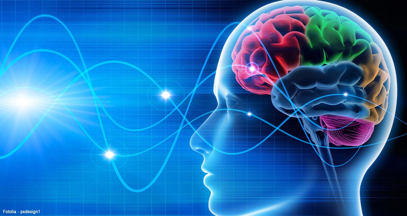 Das menschliches Hirn als neuronales Netz.